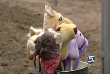 Herpès de cheval ruine un concours hippique