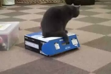 Chat despote fourre un autre chat dans une boîte