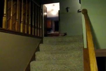 Porcelet dans l'escalier