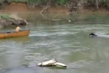 Superdog sauve chiens coincés dans le bateau