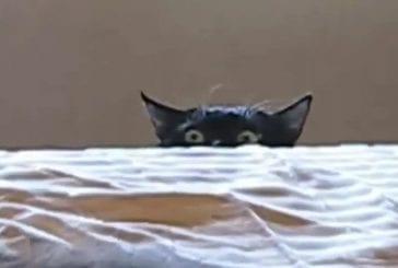 Des yeux bizarres de chat