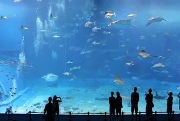 Un des plus grands aquariums du monde