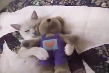 Chanson de chat