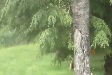 Capture de la truite organicaly