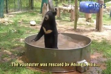 Cub excité prend un bain