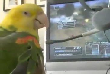 Perroquet vert jeu xbox