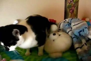 Ce chat a un problème!!