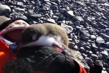 Bébé pingouin rencontre humaine pour la première fois