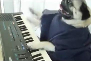 Jouer le hors chien de clavier