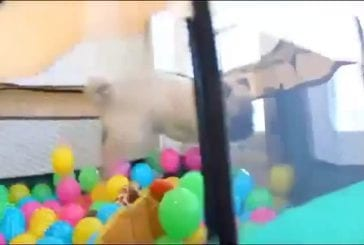 Carlin vs piscine à balles