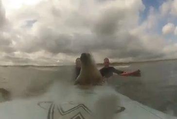 Phoque se repose sur la planche de surf