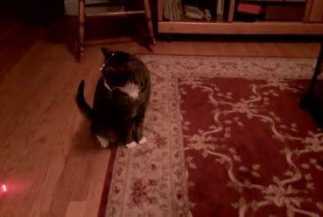 Chat avec un pointeur laser sur la tête