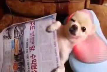 Massage pour chien