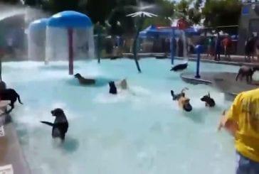 Toutou fait la fête dans la piscine