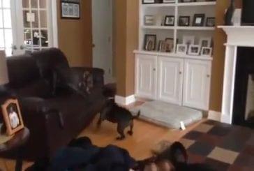Un chien qui sait voler
