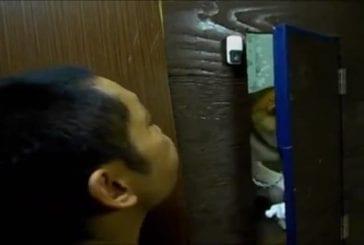 Anti-baiser shiba inu
