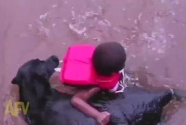 Chien de sauvetage sauve enfant de l'imminence plaisir de l'eau