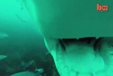 Requin requin vs