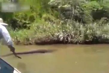 Brésiliens ont découvert le plus grand anaconda du monde