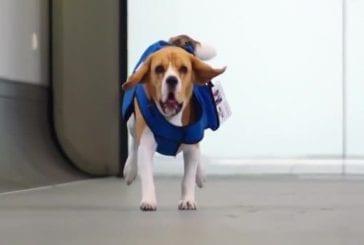 Canine de KLM perdu et retrouvé service