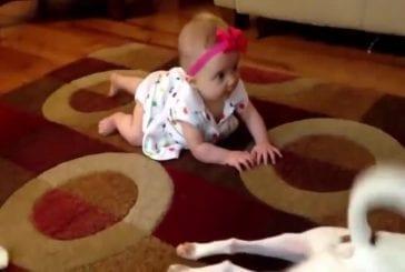 Chien tente d'enseigner bébé comment ramper
