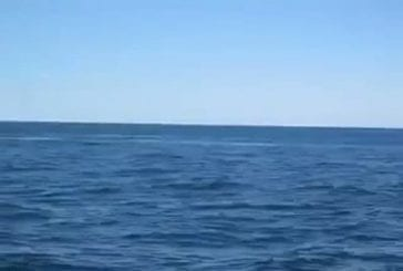 Génial près baleine saut