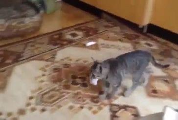 Chat se prend pour un chien