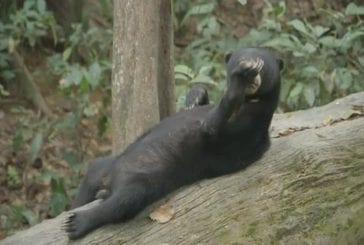Supporter de détente sur un arbre tombé