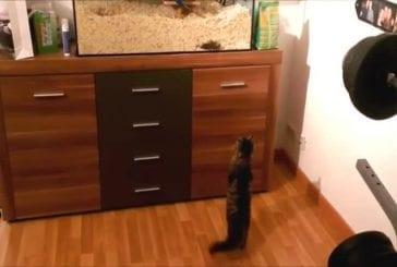 Chat se dresse comme un être humain