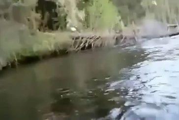 Pygargue à tête blanche vole le poisson de l'homme