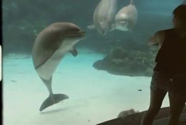 Fille fait rire des dauphins en faisant de la gymnastique