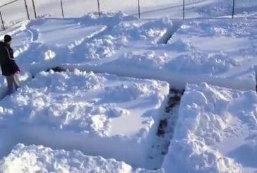 Un chien dans un labyrinthe de neige