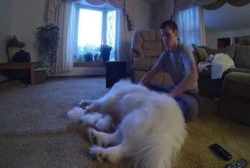 Un temps un heure laps de brosser un chien
