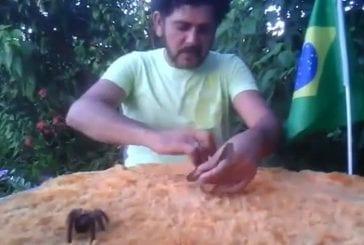 Gars brésilien fou enfonce un serpent venimeux et tarentule dans sa bouche