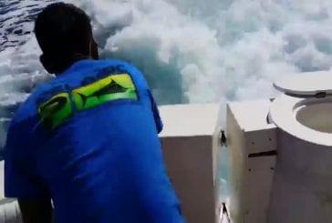 Lion de mer monte sur le bateau pour obtenir un poisson
