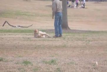 Chien paresseux ne veut pas quitter le parc