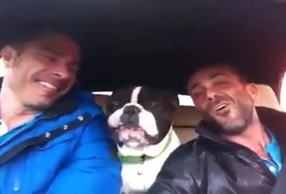 Bulldog chante avec ses propriétaires
