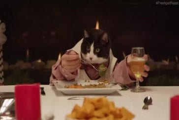 Les chats et les chiens ont un repas de fête