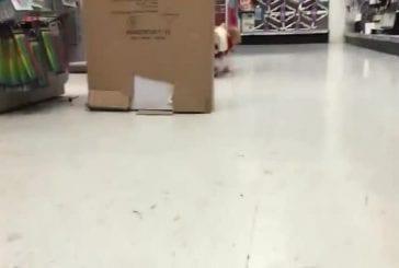 Marnie le chien sur une séance de magasinage