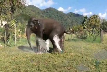 Eléphant casse arroseur