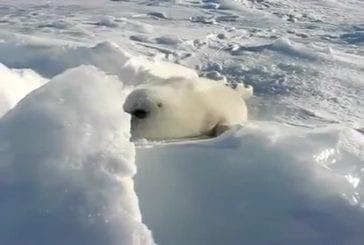 Joint bébé jouant dans la neige