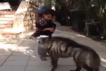 Enfant protège son bébé singe d'une hyène