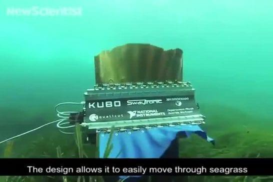Robot à quatre ailettes nage comme une seiche