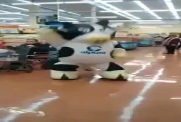 La danse supermarché de la vache