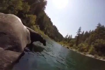 Chien plonge à 4 mètres sous l'eau