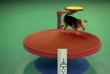 Machine chien Goldberg