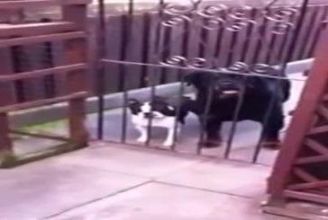 Bonjour dit le chien