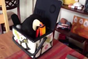 Toucan dans une boîte à coudre