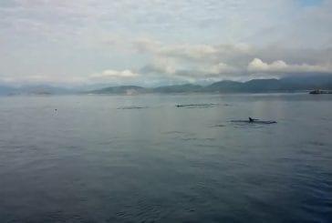 Côte ouest de orca canada