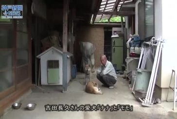 Coexistence harmonieuse au Japon